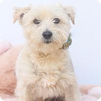 Adopt A Pet :: Watson - Loomis, CA