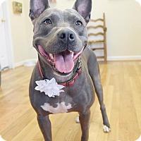 Adopt A Pet :: Zeva - Marietta, GA