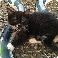Adopt A Pet :: Lovelace - Mount Laurel, NJ