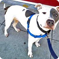 Adopt A Pet :: MACKENZIE - San Francisco, CA