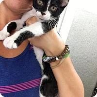 Adopt A Pet :: Spearow - Covington, KY