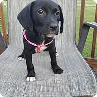 Adopt A Pet :: Sophie - Coopersburg, PA