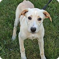 Adopt A Pet :: Jolie - Joliet, IL