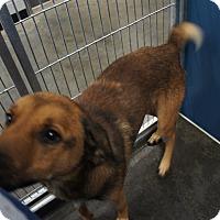 Adopt A Pet :: Yoyo - Henderson, NC