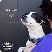 Adopt A Pet :: Luigi - Valencia, CA