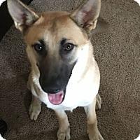 Adopt A Pet :: River - Greeneville, TN