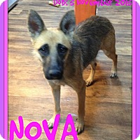 German Shepherd Dog Dog for adoption in White River Junction, Vermont - NOVA