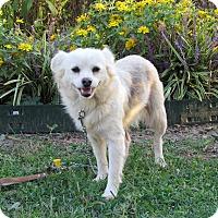 Adopt A Pet :: FLIP - Newburgh, NY
