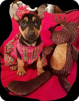 German Shepherd Dog/Rottweiler Mix Puppy for adoption in Detroit, Michigan - Sugar Plum Mary