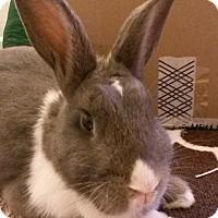 Adopt A Pet :: Dipper - Edinburg, PA