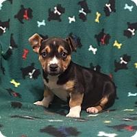 Adopt A Pet :: Vienna - Spring Valley, NY