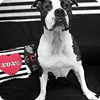 Adopt A Pet :: Sophia - Conroe, TX