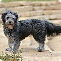 Adopt A Pet :: Brodie - Abilene, TX