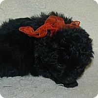 Adopt A Pet :: Cooper - Hazard, KY