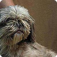 Adopt A Pet :: Skipper ADOPTED!! - Antioch, IL