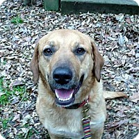 Adopt A Pet :: Mabeline - Paintsville, KY