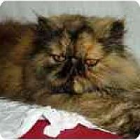 Adopt A Pet :: Nisha - Columbus, OH