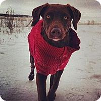 Adopt A Pet :: Sophia - Saskatoon, SK