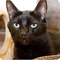 Adopt A Pet :: Elliott - Irvine, CA
