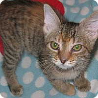 Adopt A Pet :: NancyDrew - North Highlands, CA