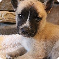 Adopt A Pet :: Harmony - Bedminster, NJ