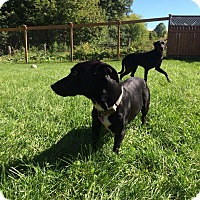 Adopt A Pet :: Slink - Douglas, ON