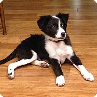 Adopt A Pet :: Milo-Adoption Pending - Midwest (WI, IL, MN), WI