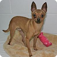 Adopt A Pet :: Sparky - Lufkin, TX