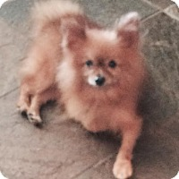 Adopt A Pet :: Bill-pending adoption - East Hartford, CT