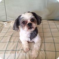 Adopt A Pet :: Pandora - Mississauga, ON