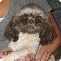 Adopt A Pet :: Maggie - Allentown, PA