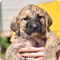 Adopt A Pet :: Sumner - Groton, MA