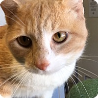 Adopt A Pet :: Clyde - Franklin, NC