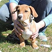 Adopt A Pet :: Jason - Berkeley Heights, NJ
