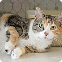 Adopt A Pet :: Erra - Midland, TX