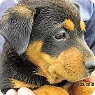 Adopt A Pet :: Monterey