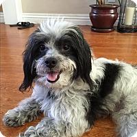 Adopt A Pet :: Cyndi - Thousand Oaks, CA