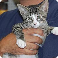 Adopt A Pet :: Hedwig - Brooklyn, NY