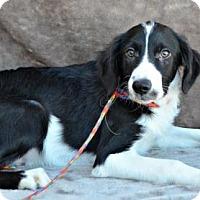 Adopt A Pet :: Seager - Yreka, CA