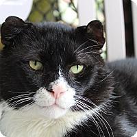 Adopt A Pet :: Crinkle - Sarasota, FL