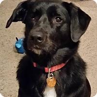 Adopt A Pet :: Kia - Lowell, IN