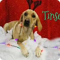 Adopt A Pet :: *TINSEL - Sugar Land, TX