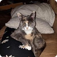 Adopt A Pet :: Daisy - Irwin, PA