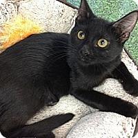 Adopt A Pet :: Ansel - Chandler, AZ
