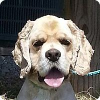 Adopt A Pet :: Teddy - Brattleboro, VT