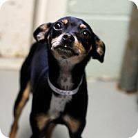 Adopt A Pet :: Kayla - Athens, GA
