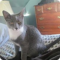 Adopt A Pet :: Jerome - Portland, ME