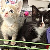 Adopt A Pet :: Tom and Jerry - Island Park, NY