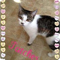 Adopt A Pet :: Patches - Mobile, AL
