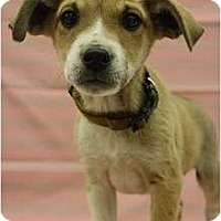 Adopt A Pet :: Durango - Broomfield, CO